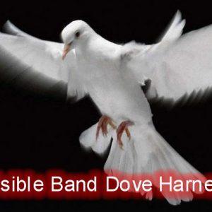Invisible Band Dove Harness