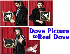 Dove Picture to Real Dove